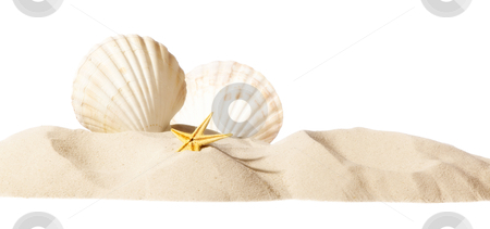 Shell on beach stock photo, shell on beach isolated on a white background, personal editing by twixx