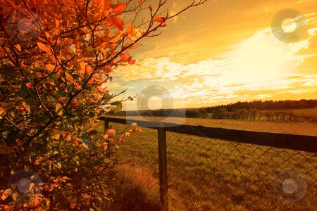 Beautiful autumn in Scotland stock photo, Beautiful autumn in Scotland, October by Juliet Photography