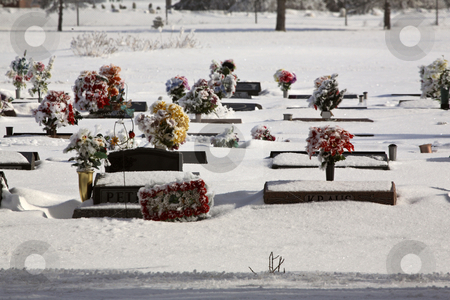 Flowers on graves in winter stock photo, Flowers on graves in winter by Mark Duffy