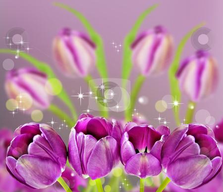 Dark pink tulips in background stock photo, Dark pink tulips in background by tish1