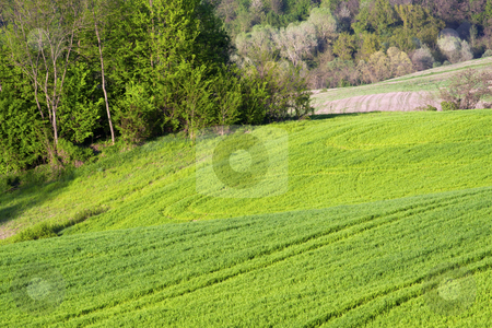 Landscape stock photo, Landscape of a hill with grass and trees by Fabio Alcini
