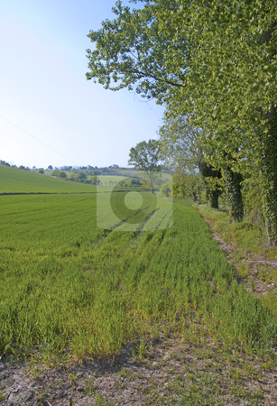 Grass stock photo, Landscape of a field of grass under big trees by Fabio Alcini