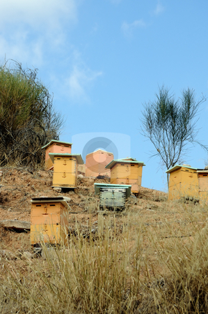 Beehives stock photo, Wooden man made beehive boxes in a forest. Honey production. by sirylok