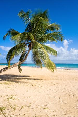 Tropical beach landscape stock photo, Tropical beach landscape from Sainte-Marie island, Madagascar by Pierre-Yves Babelon