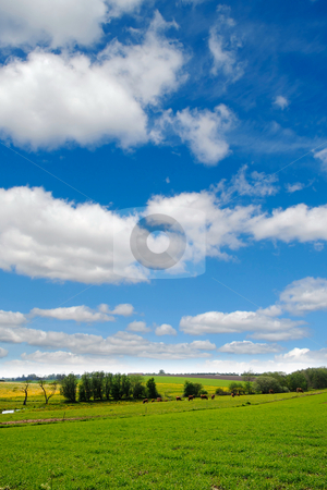 Idylic farmlandscape stock photo, Idylic farmlandscap with green fields, cows and blue cloudy sky. by Lars Christensen