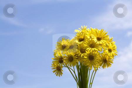 Bouquet of yellow flowers stock photo, Bouquet of yellow aster flowers by Mile Atanasov