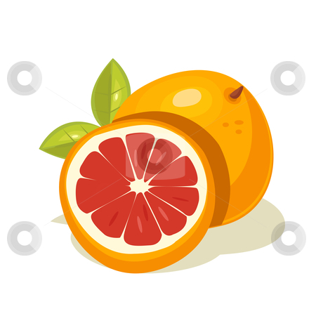 Grapefruit vector stock photo, grapefruit vector illustration by kariiika