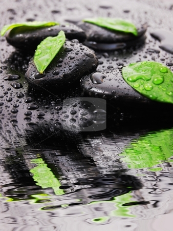 Spa stock photo, spa or zen still life with water drops reflection and grean leaves by Gunnar Pippel
