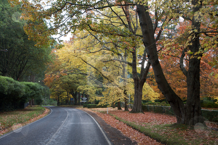 Autumn Trees stock photo, Autumn trees in a rural country side  by Vividrange