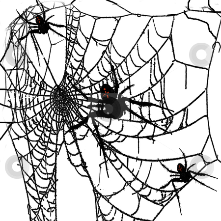 Spider Web stock photo, spider web with black widow spiders by CHERYL LAFOND