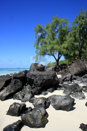 Mauritius landscape stock photo, Rocks and trees by the beach with blue sky in Mauritius    by Ingvar Bjork