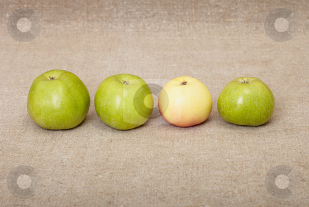 Four ripe apples against drapery stock photo, Four ripe apples against a rough drapery by Alexey Romanov