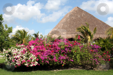 Tropical Garden and Hut stock photo, A tropical garden featuring a row of flowers. by Chris Hill