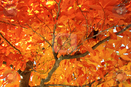 Autumn shade stock photo, Shade under a tree with glowing orange leaves during the fall season in Regina by derejeb