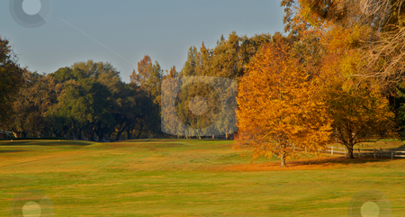 Golf Course  Greens Two gold leaf trees stock photo, Golf Course gold leaf trees during fall with fallen leaves on driving greens with wood fence by bobkeenan