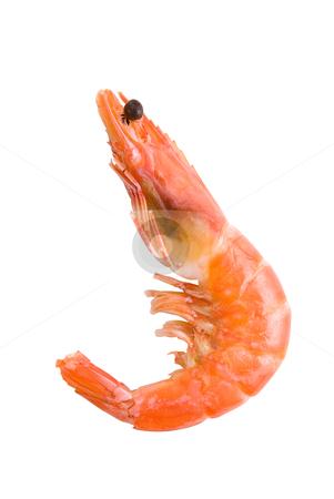 King Shrimp stock photo, King Shrimp isolated on white background by olinchuk