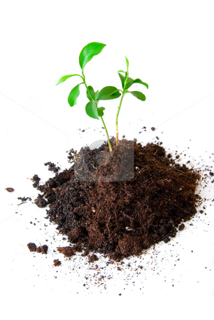 Baby plant in soil stock photo, Baby plant in soil on white background by olinchuk