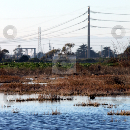 Bog wetland stock photo, wetland near the Ormond Beach california oxnard by Henrik Lehnerer