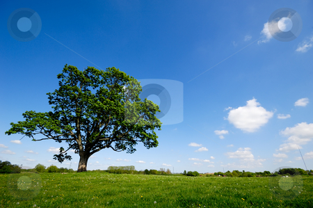 Tree stock photo, Tree on green meadow by Lars Christensen