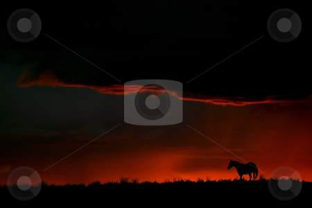 Set sun silhouetting horse on Saskatchewan ridge stock photo, Set sun silhouetting horse on Saskatchewan ridge by Mark Duffy