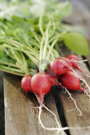 Radish stock photo, The radish (Raphanus sativus) is an edible root vegetable of the Brassicaceae family that was domesticated in Europe in pre-Roman times by Stocksnapper