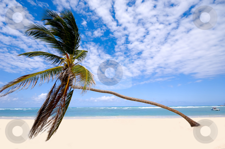 Palm on exotic beach stock photo, Palm hanging over exotic caribbean beach with the coast in the background. Dominican Republic, Punta Cana. by Lars Christensen