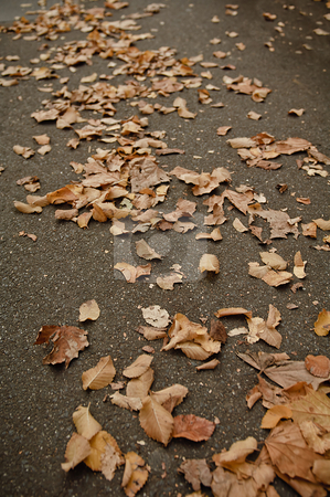 Fall stock photo, Fallen leaves on the sidewalk by thisboy