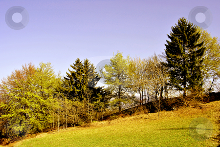 Woods in the spring stock photo, meadows and woods in the spring in the Italian Alps by freeteo
