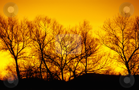 Winter trees, sunset, nature stock photography stock photo, treeline at sunset, winter, Oregon, Willamette Valley, nature stock photography by Bryan Mullennix