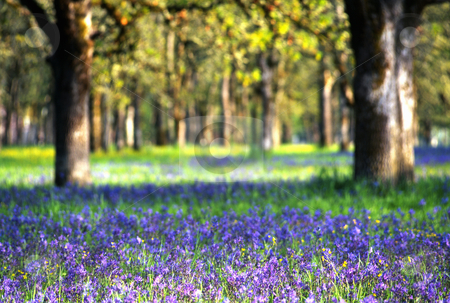 Wildflowers in meadow, nature stock photography stock photo, Field of wildflowers in meadow, nature stock photography by Bryan Mullennix
