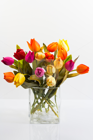 Bouquet of tulips in a vase stock photo, bouquet of tulips different colors on a white background by ludinko