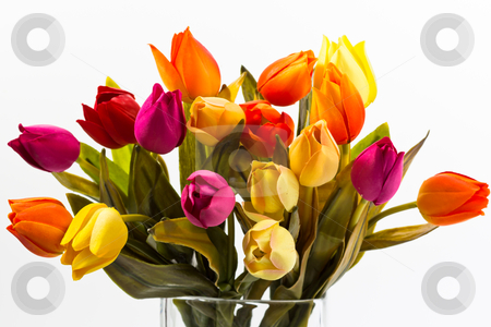 Bunch of different colors of tulips stock photo, bunch of different colors of tulips on a white background by ludinko