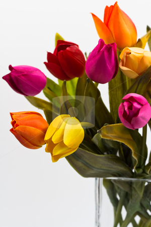 Detail of bouquet of tulips in a vase stock photo, detail of tulip bouquet of different colors on a white background by ludinko