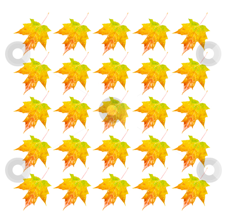 Autumn Leaves - Photo Object stock photo, Multiple Autumn colored leaf, includes clipping path by Bryan Mullennix