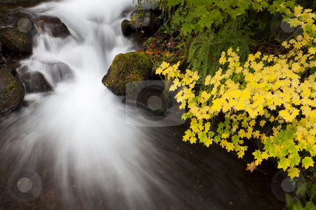 Autumn Waterfall, nature stock photography stock photo, Long exposure of a waterfall and autumn colored leaves in the Columbia Gorge area of Oregon by Bryan Mullennix