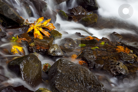 Autumn Waterfall, nature stock photography stock photo, Autumn colored leaves in the middle of a stream in the Columbia Gorge area of Oregon by Bryan Mullennix