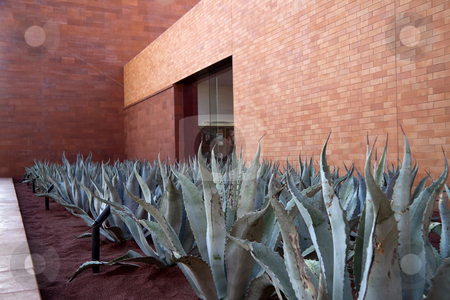 Aloe Vera Plants stock photo, A row of aloe vera plants with a brick building in the background by Kevin Tietz