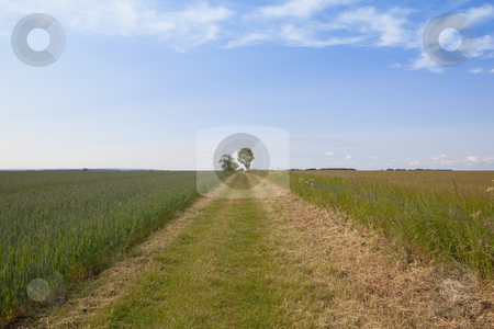 Agricultural landscape 2 stock photo, an english landscape with a mown farm track between fields of wheat and barley under a blue sky by Mike Smith