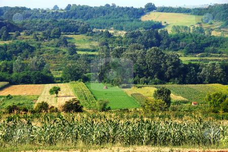 Rural Serbia stock photo, yellow fields and green meadows of rural Serbia by Julija Sapic