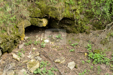 Garter Snake Den stock photo, A large garter snake den with snakes emerging and on the ground. by Richard Nelson