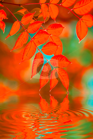 Autumn leaves stock photo, autumn leaves reflecting in the water, shallow focus by olinchuk