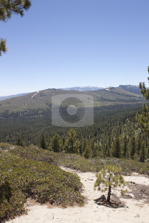 Forest Mountain Range stock photo, A heavily forest range in the sierra nevadaas. by Jeremy Baumann