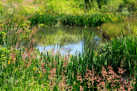 Beautiful Pond stock photo, Little body of water reflecting the flowers, grasses, plants and small trees surrounding it in a peaceful setting. by Lee Serenethos
