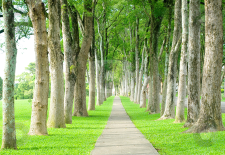 Road through row of trees stock photo, Little road through row of trees by Lawren
