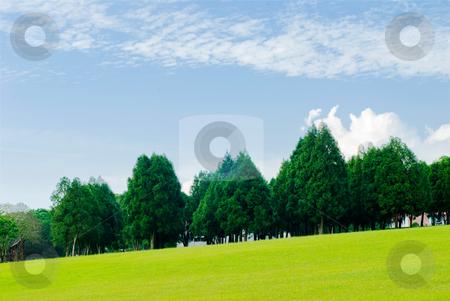 Green grassland, pine trees under blue sky stock photo, Green grassland, pine trees and blue sky by Lawren
