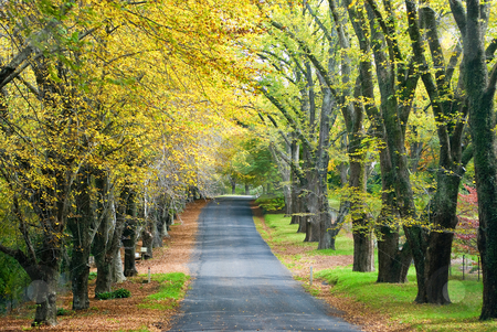 Autumn Road stock photo, Glorious road in autumn with gold colour tree lines by mroz