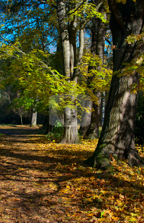 Autumn Forest stock photo, Autumn Forest - Path and Trees in Sunny Weather by JAMDesign