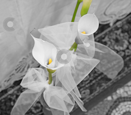 Calla stock photo, Two callas in a bouquet, balck and white by Fabio Alcini