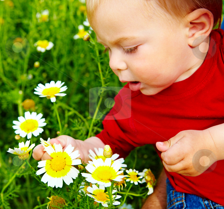 Boy in flowers stock photo, little boy enjoying outdoors in field of flowers on a summer day by lubavnel