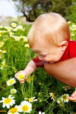 Boy in flowers stock photo, little boy enjoying outdoors in field of flowers on a summer day by lubavnel